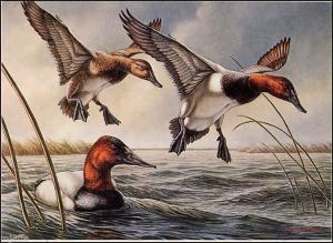 MINNESOTA #4 1980 STATE DUCK STAMP PRINT CANVASBACKS by James Meger List $400