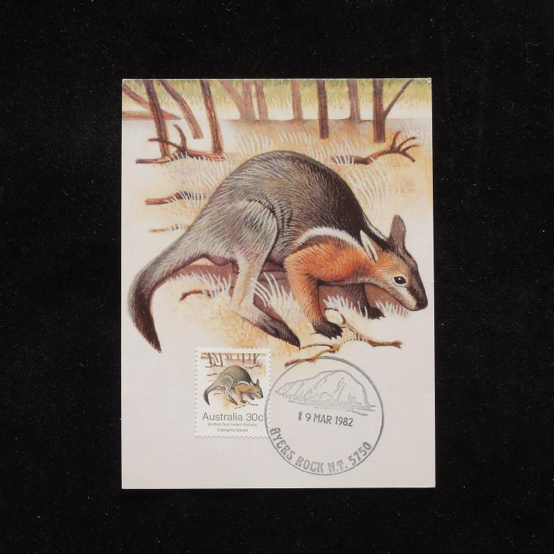 ZG-A568 MAXIMUM CARD - Australia, 1982 Fdc Wallaby Postcard