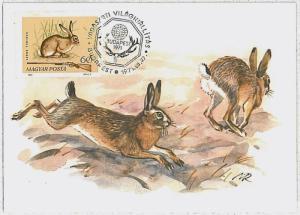 MAXIMUM CARD - POSTAL HISTORY - Hungary: Hares, Jackrabbits, Rabit, Hunting 1971