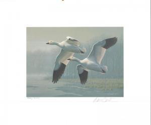 NEW JERSEY  #6 1989  DUCK  STAMP PRINT  SNOW GEESE By Daniel Smith 4 stamps