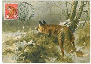 MAXIMUM CARD - POSTAL HISTORY -  Switzerland: Foxes, Squirrels, Fauna, 1966