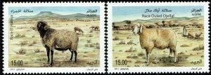 Algeria #1538-39  MNH - Sheep Breeds (2011)