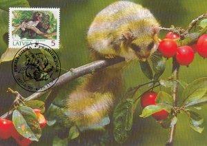 Latvia 1994 Maxicard Sc #381 5s Edible dormouse WWF