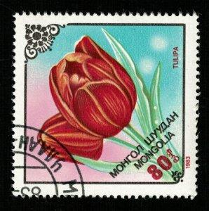 Flower, Mongolia (TS-2273)