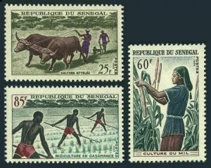 Senegal 250-252,MNH.Michel 307-309. Agriculture 1965.Ox team,Millet,Rice field.