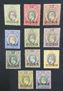 MOMEN: SOUTHERN NIGERIA SG #10s-20s 1903-04 SPECIMEN MINT OG H LOT #191444-522