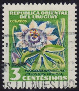 Uruguay - 1954 - Scott #608 - used - Flower