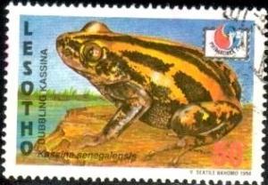 Frog, Bubbling Kassina, Lesotho stamp SC#1012 used