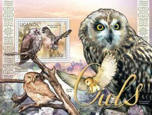 Uganda - Owls, Verreaux's Eagle-Owl, Barn Owl, Short-eared Owl 21D-016