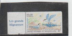 St. Pierre & Miquelon  Scott#  C71  MH/HR  (1995 Arctic Terns)