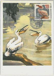 MAXIMU CARD - Fauna animals BIRDS : RUSSIA USSR 1964 - PELICAN