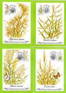 Bophuthatswana - 1984 Indigenous Grasses Maxi Card Set SG 116-119
