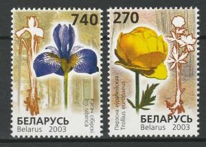 Belarus 2003 Flora Flowers Plants 2 MNH stamps