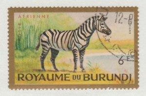 C1  Zebra