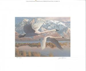 UTAH #1 1986 STATE DUCK STAMP PRINT WHISTLING SWANS  by Leon Parson