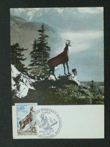chamois isard izard mountains maximum card 40655