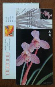 Ruyi pink lotus type fringe lotus petal Cymbidium orchid,CN01 baoshan orchid PSC