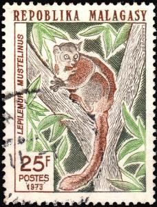 MADAGASCAR - 1973 - Mi.699  5fr Greater weasel lemur (Lepilemur mustelinus)