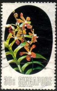 Aranda Orchid, Singapore stamp SC#248 used