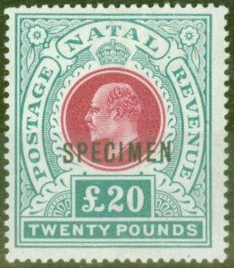 Natal 1902 £20 Red & Green Specimen SG145bs Fine & Fresh Lightly Mtd Mint