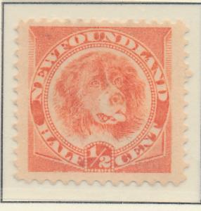 Newfoundland (Canada) Stamp Scott #57, Unused, Mint No Gum - Free U.S. Shippi...