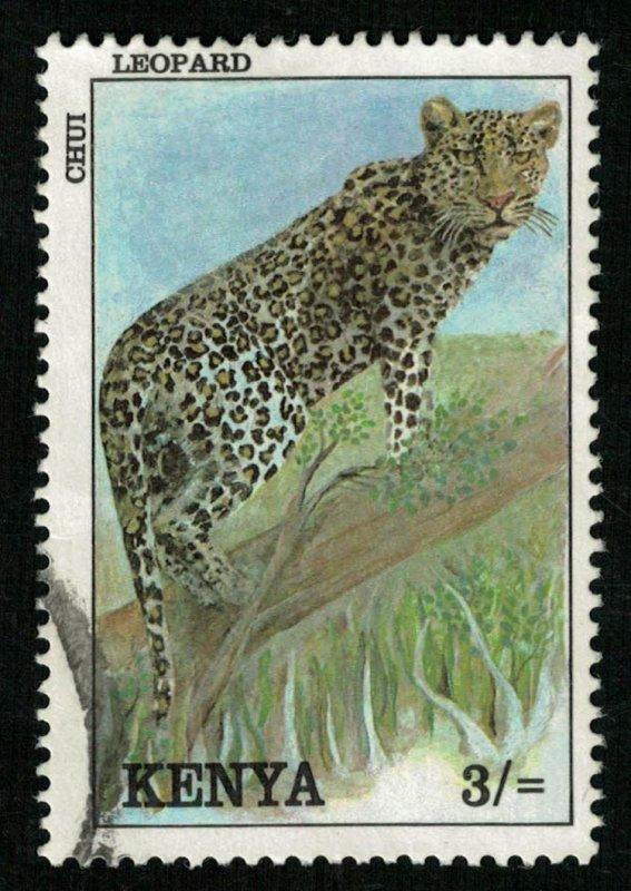 Animal, 3/=, Cat (T-5235)