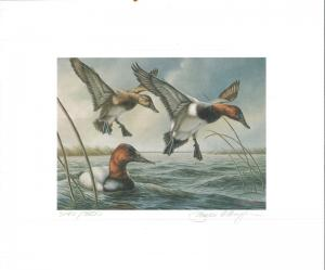 MINNESOTA #4 1980 STATE DUCK STAMP PRINT CANVASBACKS by James Meager