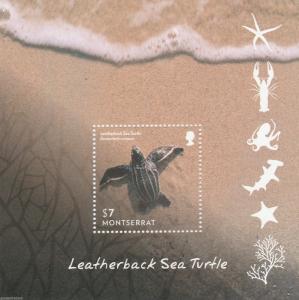 MONTSERRAT   Leatherback Turtle