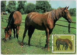 MAXIMUM CARD - POSTAL HISTORY -  Germany DDR: Horses,  Fauna, 1967