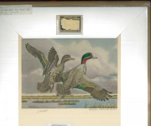 KANSAS #1 1987  STATE DUCK STAMP PRINT  EXEC ED GREEN WINGED TEAL  Guy Coheleach