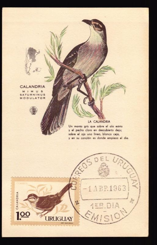 1963 URUGUAY BIRD  MAXI CARD MAXIMUM cALANDRIA MIMUS SATURNINUS
