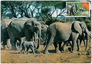MAXIMUM CARD - POSTAL HISTORY - Gabon: Elephants, Wild Animals, Safari, 1967