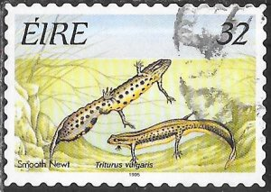 Ireland 982D Used - Amphibians - Smooth Newt