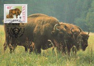 Lithuania 1996 Maxicard Sc #530 40c European bison WWF
