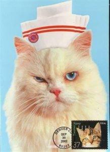 HNLP Hideaki Nakano Greeting Card Spay Neuter 3670 Cat You Better Get Well Soon!