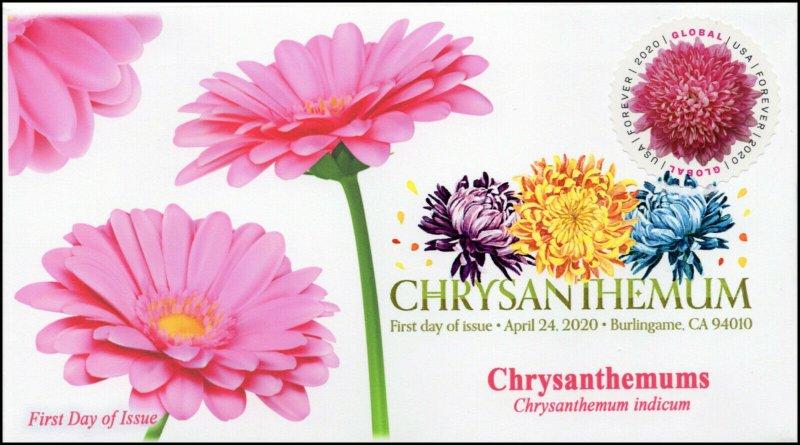 20-085, 2020, Chrysanthemum, Digital Color Postmark, First Day Cover, Internatio