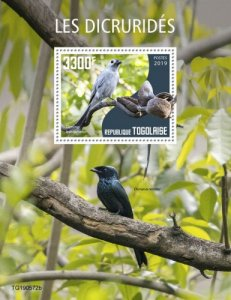 TOGO - 2019 - Birds : Drongos - Perf Souv Sheet - M N H