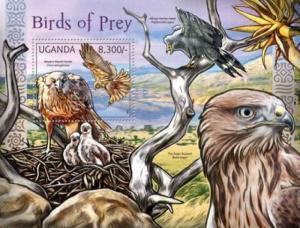 Uganda - African Birds of Prey - Harrier-Hawk, Augur Buzzard - 21D-004