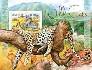 Uganda – African Wild Cats – Leopard, Lion, Caracal, Serval – 21D-020