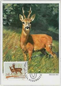 MAXIMUM CARD - POSTAL HISTORY -  Hungary: Deer, Hunting, Fauna, 1964