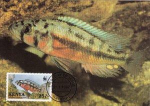 Kenya 1997 Maxicard Sc #703 25sh Orange Rock hunter cichlid WWF