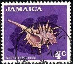 Murex Antillarum, Sea Shell, Jamaica stamp SC#222 used