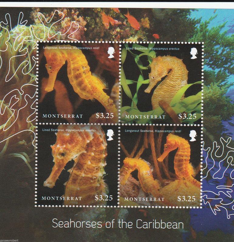 MONTSERRAT   Seahorses