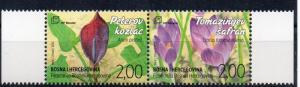 BOSNIA-HERZEGOVINA - MOSTAR - FLOWERS - 2015 -