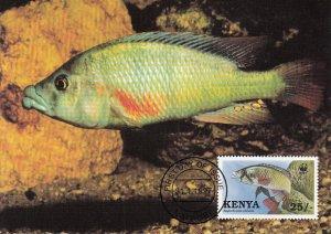 Kenya 1997 Maxicard Sc #704 25sh Lobe-lipped cichlid WWF