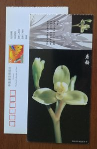 Shoumei Cymbidium tortisepalum orchid,CN01 baoshan only one rare wild orchid PSC