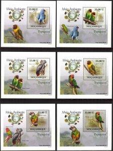 {143} Mozambique 2010 Birds Parrots 6 S/S Deluxe MNH**