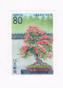 Japan Prefecture Used Z542 Bonsai Tree (JZ243)+