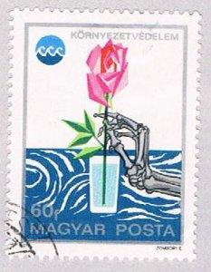 Hungary Rose 60 (AP102901)