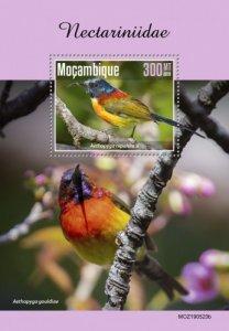 MOZAMBIQUE - 2019 - Sunbirds - Perf Souv Sheet  - M N H